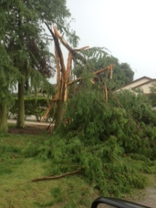 Lightning Strike 7/26/14 #9 Cypress Tree