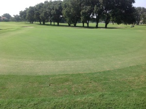 8/6/13 #9  Green TifGrand Collars
