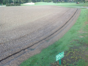 6/24/13 Ready for Topdress Sand and Champion Spriggs